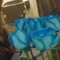 「blue rose」から